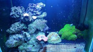 Saltwater tank2